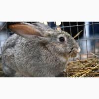 Комбикорм для кроликов от 6 недель Откорм