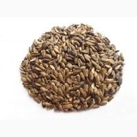 Расторопша семена, 1кг