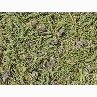 Эспарцет (трава) 1 кг