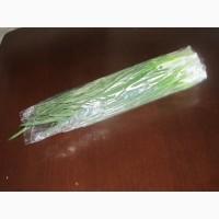Зелена цибуля