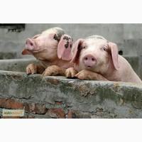 Комбикорм для свиней СТАРТ (до 30 кг.)