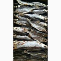 Продам вяленую речную рыбу