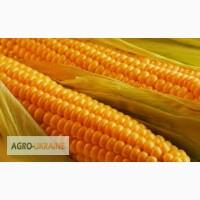 Закупаем по конкурентной цене кукурузу по Винницкой обл