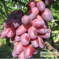 Продам саженцы винограда столовых и технических сортов