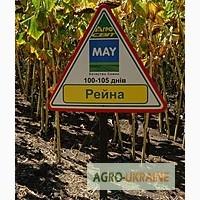 Рейна гибрид устойчивый к 8 расам заразихи May Agro Seed (Турция)