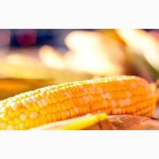 Закупаем кукурузу.Есть самовывоз