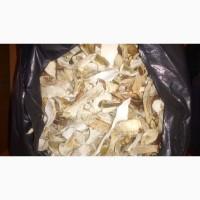 Белые грибы сушеные. Білі гриби сушені