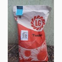 Продам семена подсолнечника Лимагрейн Тунка, LG 5580, LG 59580