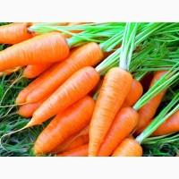 Закупаю морковь дорого крупным и мелким оптом ежедневно на постоянной основе