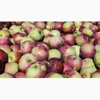 Продажа яблок оптом в больших количествах, Черновцы и обл