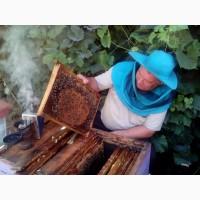 Продам натуральный мед. Своя пасека Сумская область