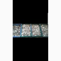 Білі сухі гриби