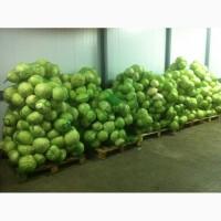Продам капусту, 5т
