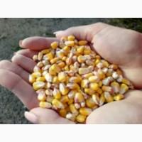 Продам Кукуруза Фуражную Оптом Розницу