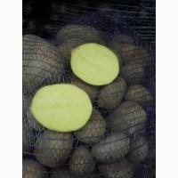 Продам товарну картоплю, різні сорти, висока якість