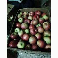 Яблука на повідло, варення, джем