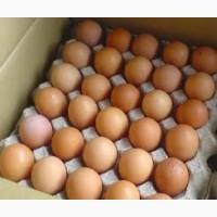 Реализуем инкубационные яйца круглый год, бройлеров и породной птицы