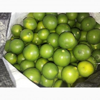 Fresh Lemon / Limes for sale / Ginger and Fresh Gallic