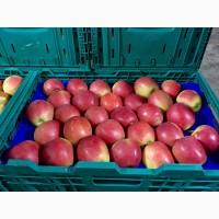 Яблуко Брейбурн з холодильника