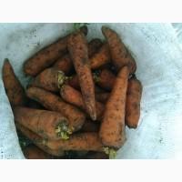 Продам морковь