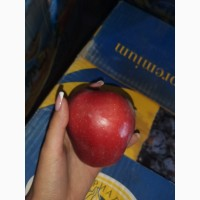 Продам яблока разных сортов