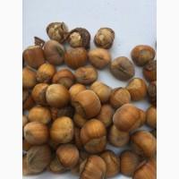 Продам горіх фундук, каталонський, ліщина