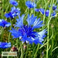Василёк синий (цветы) 50 грамм