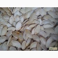 Продам гарбузове насіння(семочку тикви) сорт «Українка багатоплідна»
