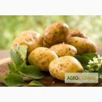 Картофель (таможенное оформление Импорт/экспорт)