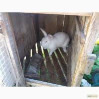 Кролики ПАНОН