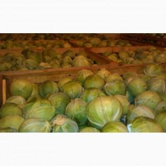 Продам капусту зимних сортов Зенон