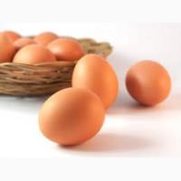 Продам Инкубационные яйцо Ломан Браун
