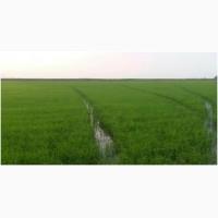 Продам рисовое хозяйство в Херсонской обл