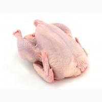 Оптовая и розничная продажа тушки курицы