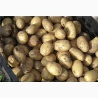 Продам товарный картофель Опал из песка