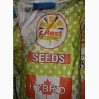 Продам гибрид кукурузи G HOST