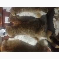 Продам шкурки кролика породы Рекс
