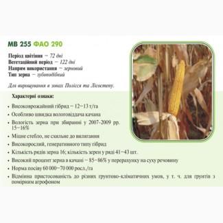 Насiння кукурудзи МВ 255 (ФАО 290) ДЦ Академії Наук Угорщини м.Мартонваша