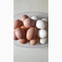 Продам яйцо домашнее