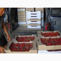Клубника Свежая сорт ОПТ Альбион, Клэри 5 тонны качество гарантируем