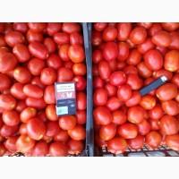 Продам помидор сорт Диофан, 3402