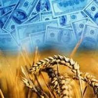 Покупаем пшеницу, рапс, сою, ячмень, кукурузу