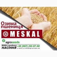 Озимая пшеница Meskal (Limagrain)