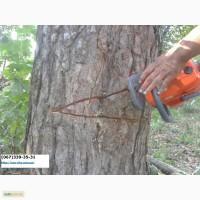 Профессиональный спил деревьев