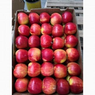 Красивые вкусные яблоки от производителя оптом из холодильника, газированные( смарт фреш)