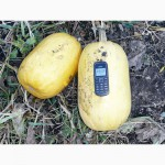 Семена тыквы Волжская серая (Сероволжская) Дамский ноготь (Болгарка) посевной материал1R