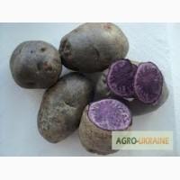 Продам картоплю кольорову