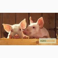 Ароматизатор кормовой: Сливки-ваниль (EFF Англия)