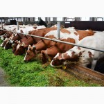 Экспорт. Сыворотка молочная сухая деминирал. 40%