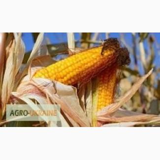 Продам гібрид кукурудзи ГРАН 6 (урож.2017 р.)